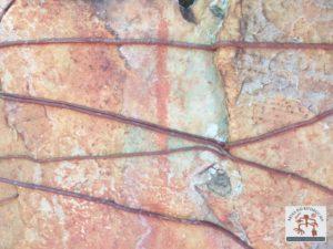 Arte rupestre bastante depredada