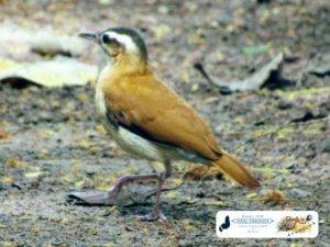 Pássaros da Barragem Piracuruca